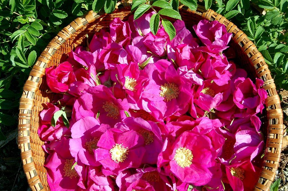 Rose Petals Basket