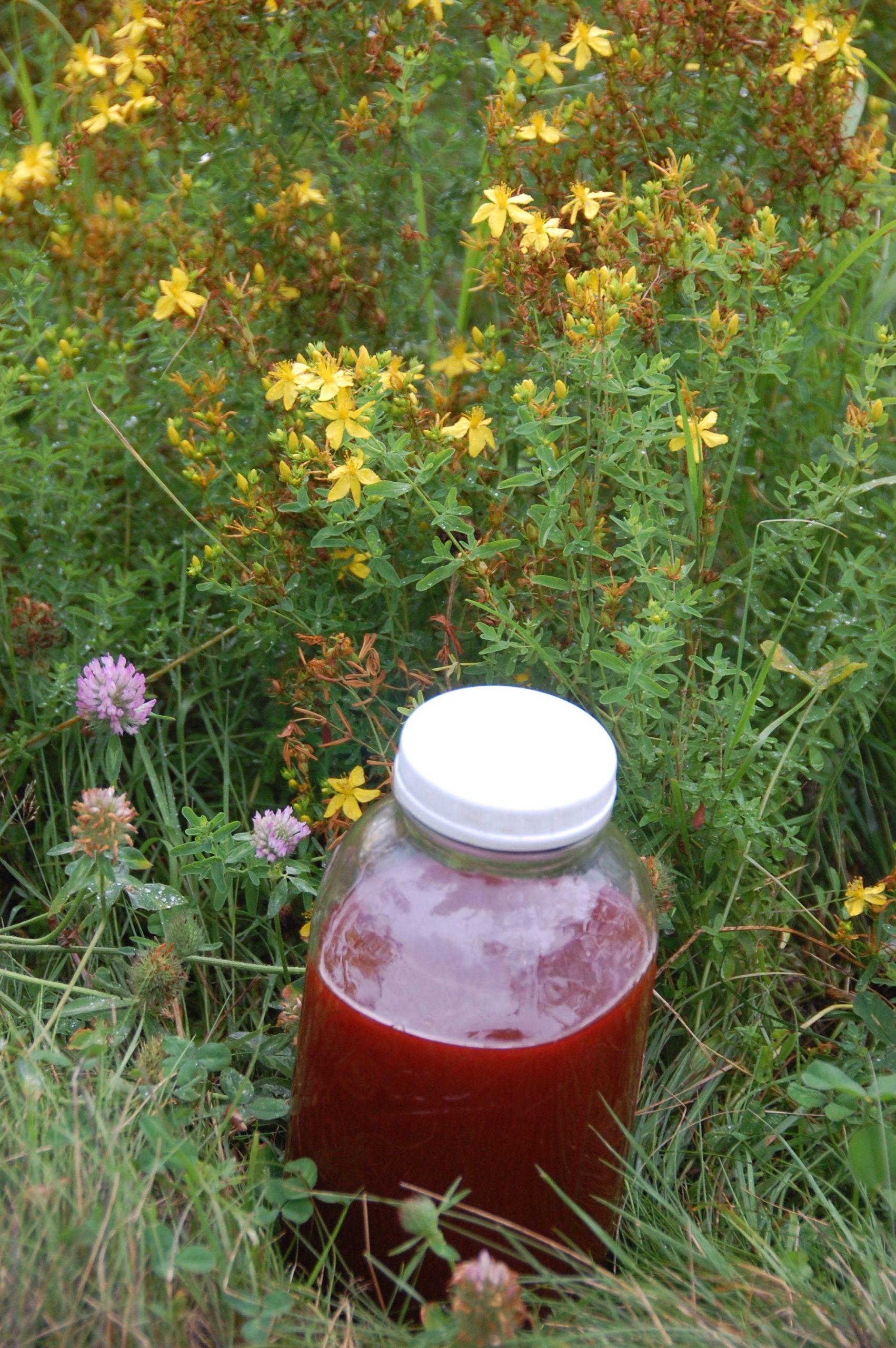 St John's Wort flowers and oil